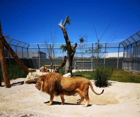 lion_la_taniere_0.jpg